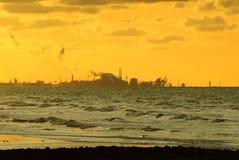 海滩的工厂 免版税库存图片