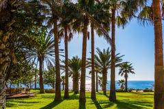 海滩的棕榈树丛 免版税库存照片