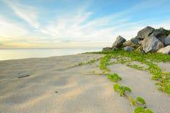 海滩的横向 免版税库存图片