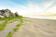 海滩的横向 免版税库存照片