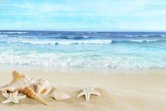 海滩的看法与壳的在沙子 免版税库存照片
