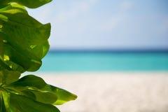 海滩的绿色植物 免版税库存照片