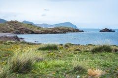 海滩看法与植物前景的和岩石的在背景中 库存图片