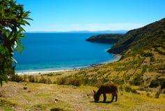 海滩看法在伊斯拉del sol,Titicaca湖,玻利维亚的 库存图片