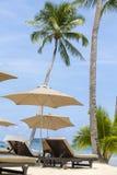 海滩睡椅、伞和在热带沙子的可可椰子树在海岛张,泰国靠岸 图库摄影