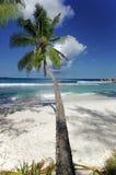 海滩突出物棕榈树 免版税库存照片