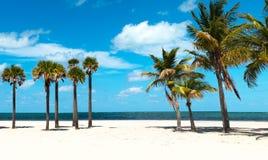 海滩组棕榈树 图库摄影