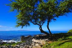 海滩结构树远见 免版税库存图片