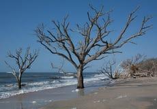 海滩结构树 库存照片