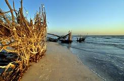 海滩美丽的佛罗里达结构树连根了拔 免版税库存图片
