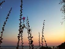 海滩美丽的日夏天妇女年轻人 免版税库存图片