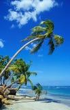 海滩美丽的棕榈树 库存图片