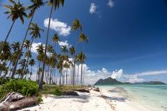 海滩美丽的椰子树 库存图片