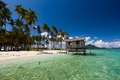 海滩美丽的椰子树 免版税图库摄影