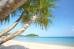 海滩美洲红树 免版税库存照片