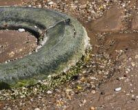 海滩老轮胎 免版税库存照片