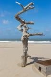 海滩胸口停止的珍宝结构树 免版税库存照片