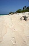 海滩脚步菲律宾铺沙热带 免版税图库摄影