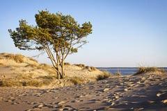 海滩芬兰yyteri 免版税库存图片
