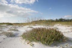 海滩草天空 库存图片