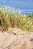 海滩草 免版税库存照片