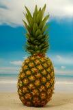 海滩菠萝 库存图片
