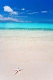 海滩蓝色夏威夷海星 免版税图库摄影