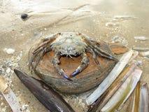 海滩螃蟹 库存图片