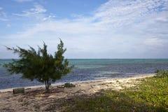 海滩被风吹扫的开曼群岛 库存照片