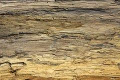 海滩详细资料漂流木头英国点沙子英&# 免版税库存图片