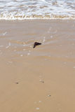 海滩详细资料石头 库存图片