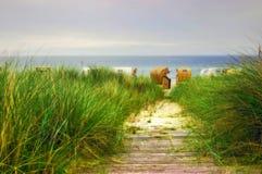 海滩路径向波罗的海 免版税库存图片