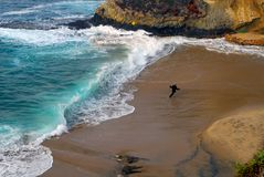 海滩跳舞人 免版税图库摄影