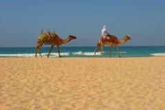 海滩迪拜 免版税库存图片
