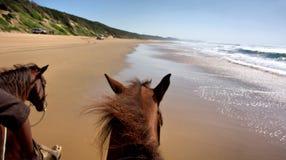 海滩马骑术视图 库存照片