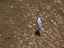 海滩鸟海运 图库摄影