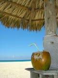 海滩鸡尾酒椰子 库存照片