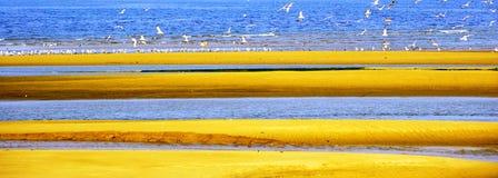 海滩鸥沙子海运 免版税库存图片