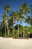 海滩boracay热带的棕榈树 免版税图库摄影