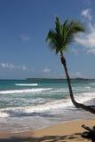 海滩coson多米尼加共和国 免版税库存照片
