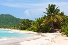 海滩culebra佛拉明柯舞曲海岛 免版税图库摄影