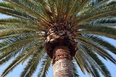 海滩hermosa棕榈树 库存照片