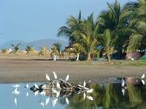 海滩ixtapa 图库摄影