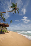 海滩lankan sri 免版税图库摄影