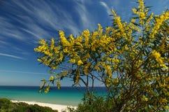 海滩margherita s撒丁岛 免版税图库摄影