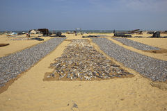 海滩negombo 库存图片
