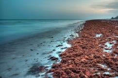 海滩sanibel 免版税库存照片