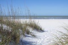 海燕麦和白色沙丘在海滩在圣彼德堡,小花 图库摄影