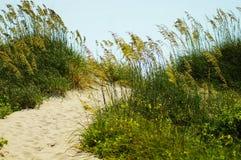 海燕麦和NC外面银行的沙丘  图库摄影