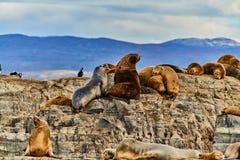 海狮和一只鸟在一个小海岛上小猎犬运河的 阿根廷巴塔哥尼亚在秋天 库存图片